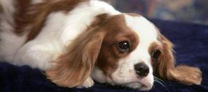 Πρόληψη από ασθένειες στο σκύλο