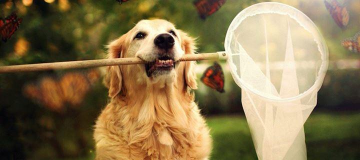 11 μυστικά για να είναι ευτυχισμένος ο σκύλος μας