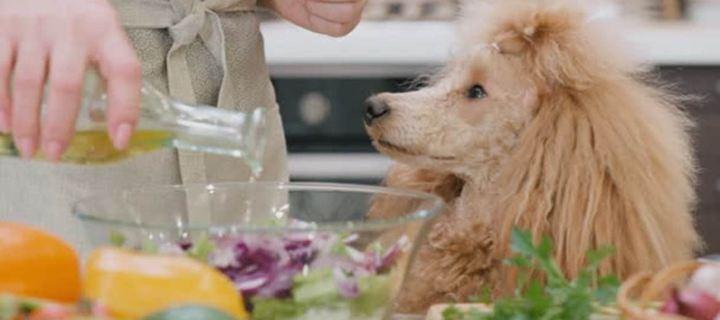 Γιατί να προσθέσεις ελαιόλαδο στη διατροφή του σκύλου σου