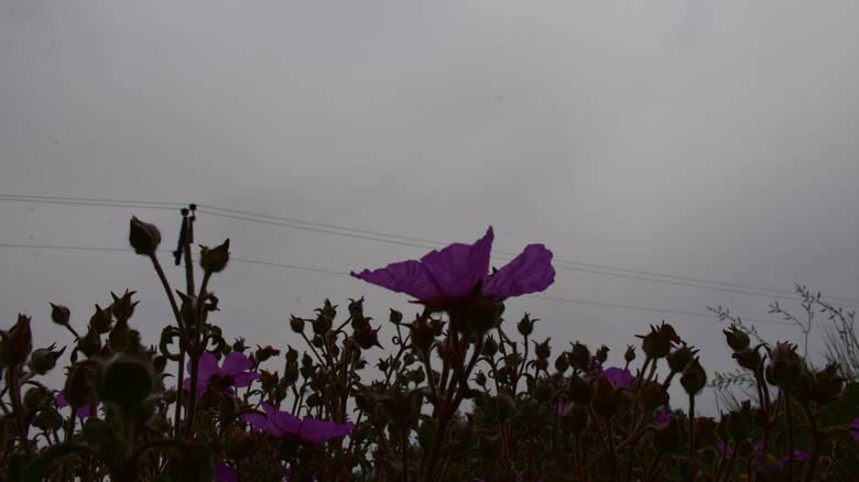 Καιρός: Ζέστη με λιακάδα και… βροχές