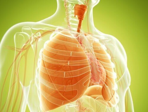 Αποτοξίνωση των πνευμόνων σας