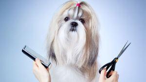 Tips για λιγότερες τρίχες του σκύλου μέσα στο σπίτι