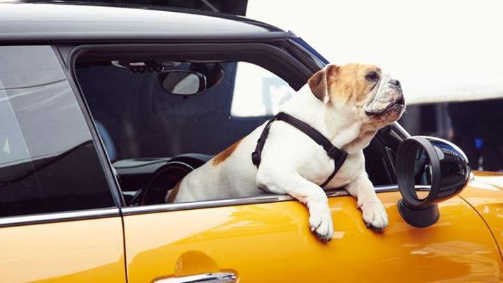 Read more about the article Γιατί δεν πρέπει να οδηγείς με τον σκύλο σου στη θέση του συνοδηγού;