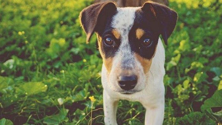 Έρευνα: Κι όμως ο σκύλος σας μπορεί να «πει» ψέματα