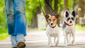 Το λάθος που κάνουμε όταν προσπαθούμε να μάθουμε στο σκύλο μας μια εντολή
