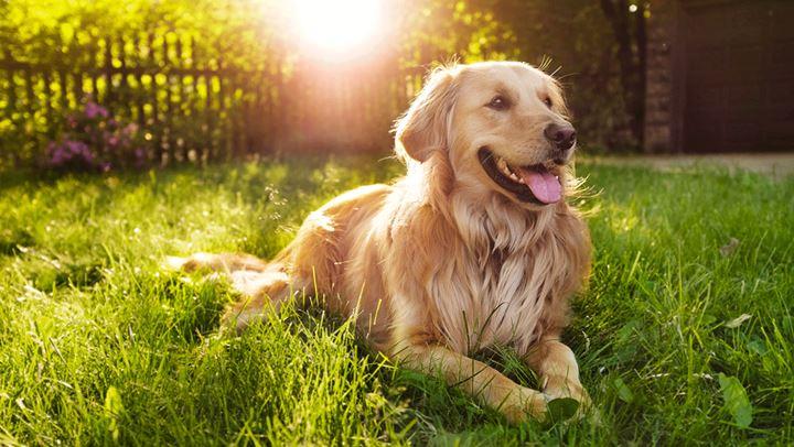 Γιατί ο σκύλος σας κάθεται στον ήλιο;