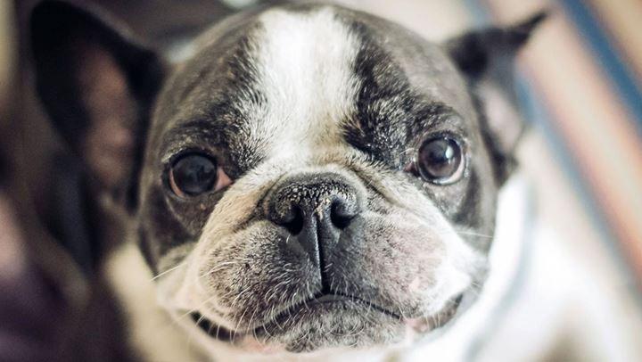 Γιατί η μύτη του σκύλου μου είναι υγρή;