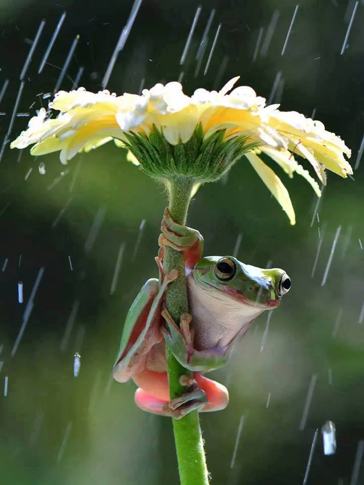 dieren in de regen 4
