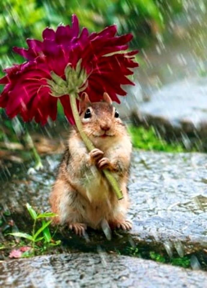 dieren in de regen 5