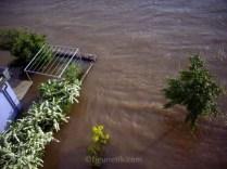 hochwasser-meissen-flut-elbe-07-07-2013-19-20-uhr (1)