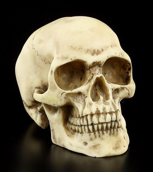 Totenkopf  Menschen Schdel  Figur Deko Totenschdel Skull  eBay
