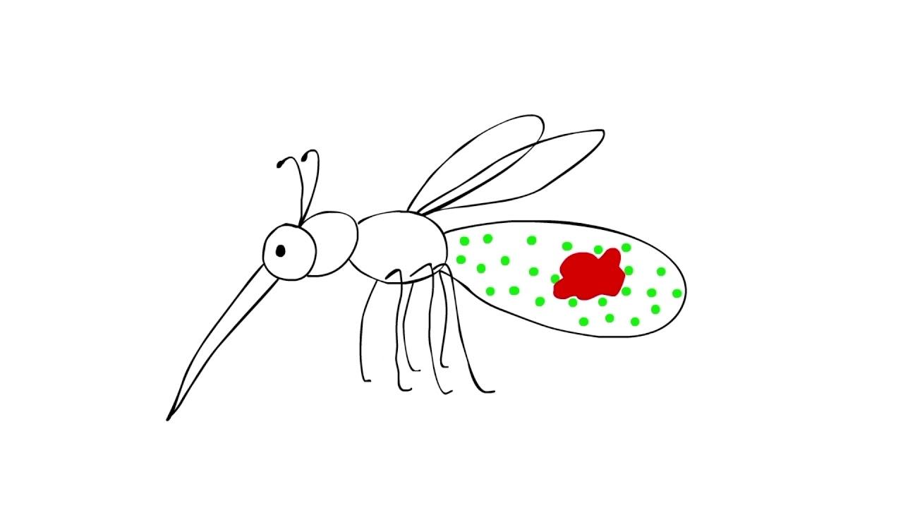 The Fiji Times » Wolbachia-carrying mosquitoes to be