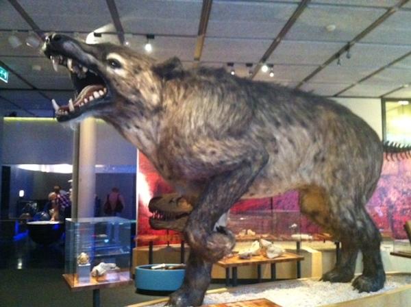 Andrewsarchus bij Museon in Den Haag  Fijnuitnl