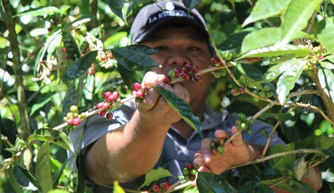 Costa Rica garantiza acceso a salud para indígenas panameños durante el período de cosecha del café