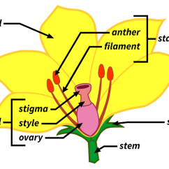 Parts Of A Flowering Plant Diagram 3 Phase Electric Water Heater Wiring Reach For The Sun Warm Up Lesson What Are Structures Plants Filament Games