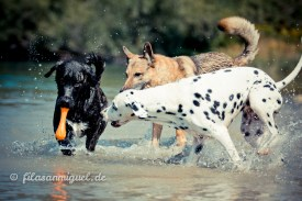 Zim, Lobo und Naila