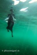 Zim unter Wasser
