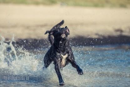 Zim @ beach frisbee