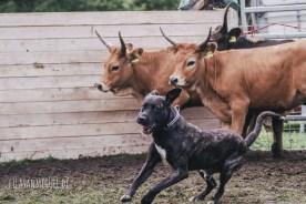 der, der mit dem Kühen tanzt ;)
