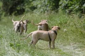 Simba und seine Brüder