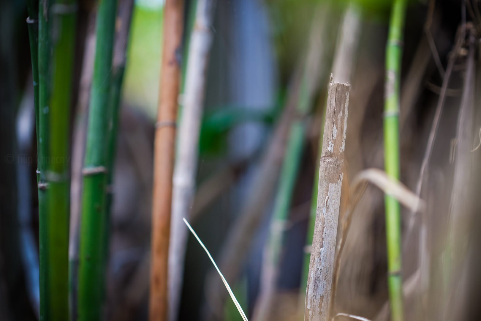 some bamboo shots