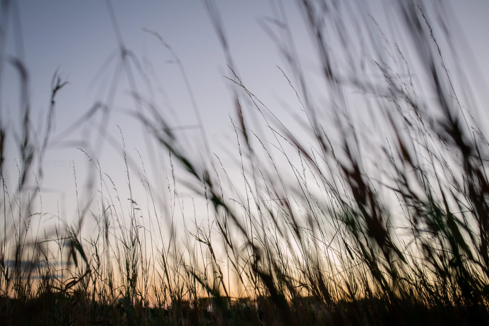 field of grass against sunset sky