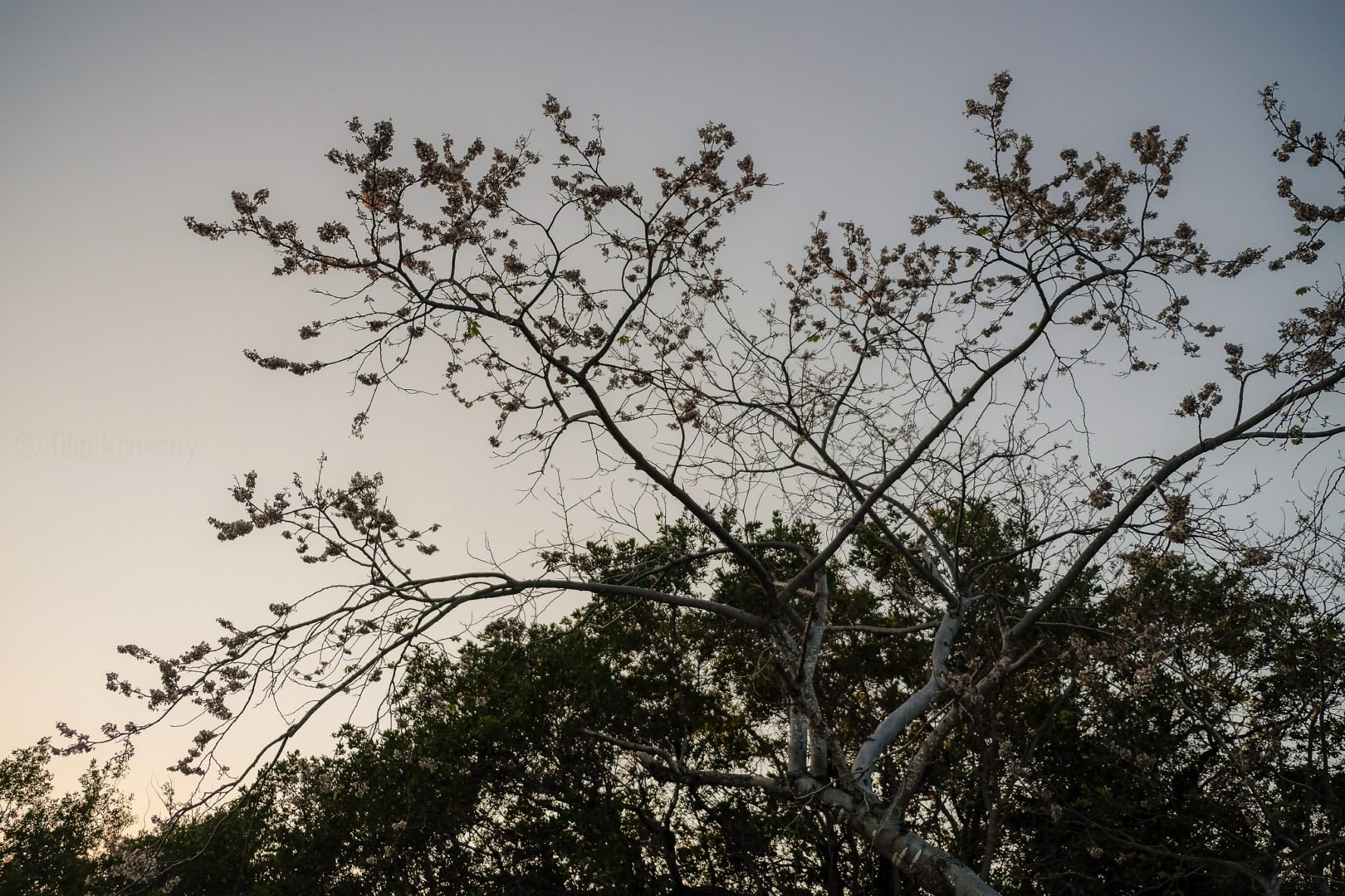tree branches against evening sky