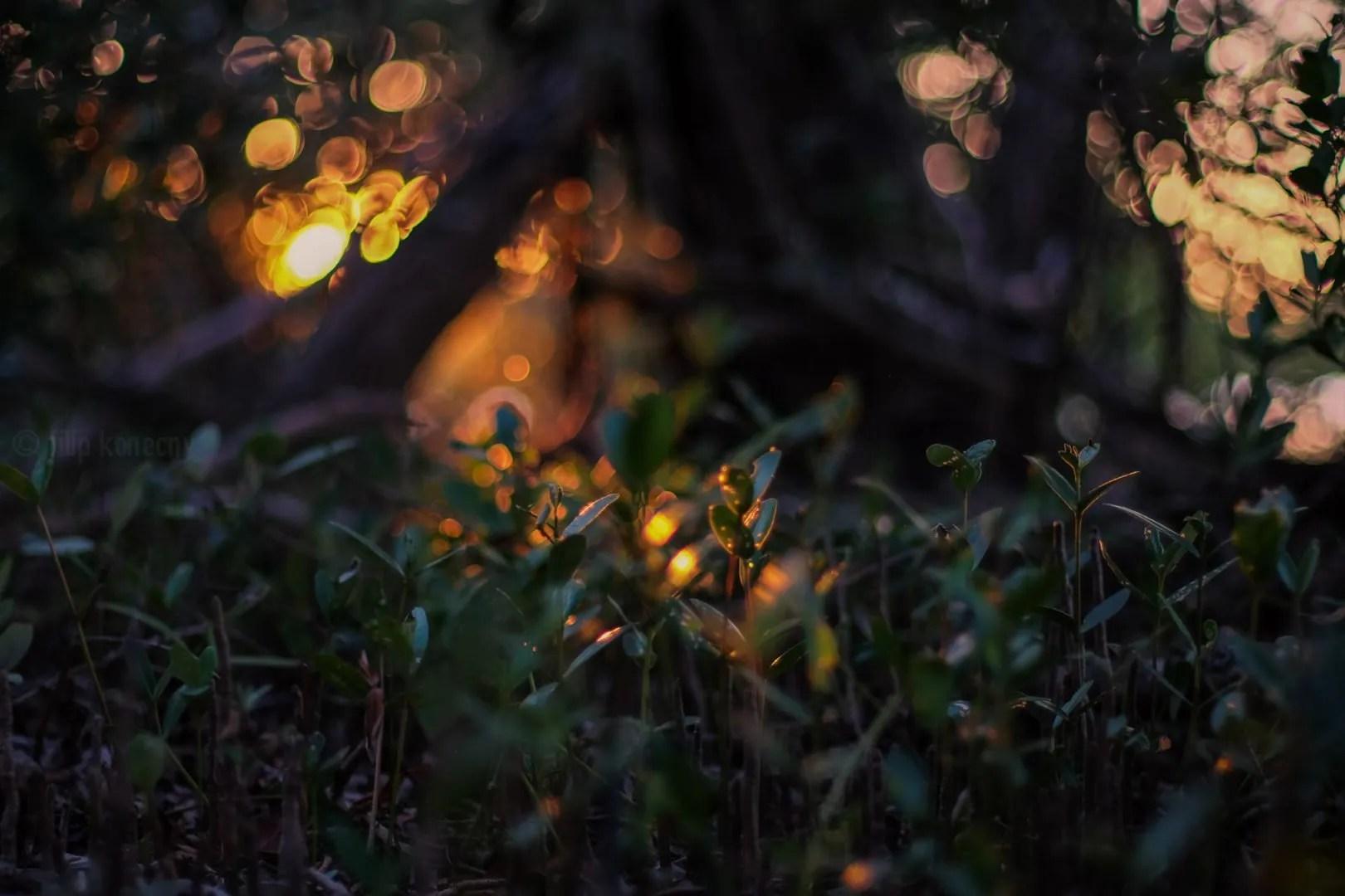 beautiful florida light with green plants
