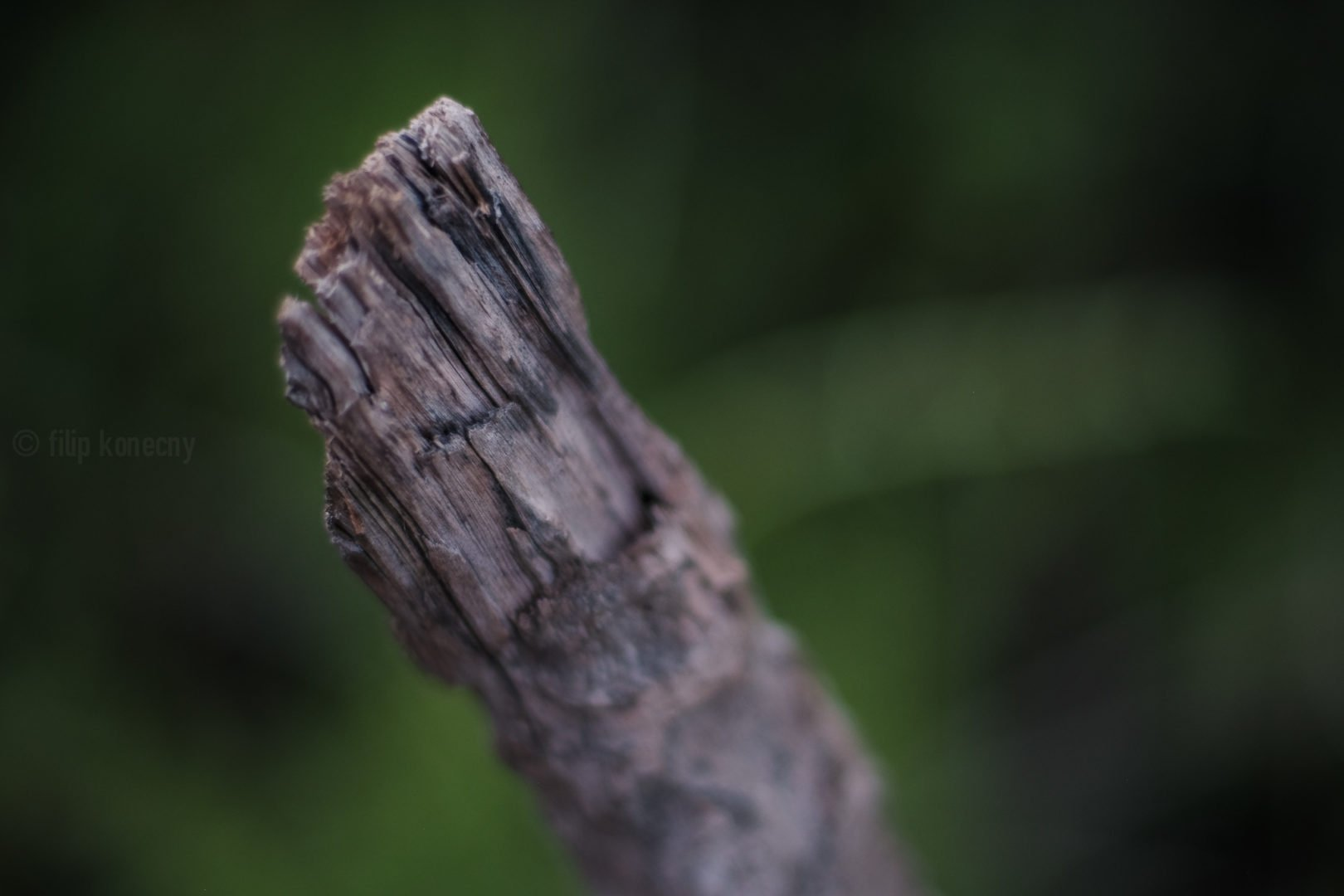 close up of dead branch