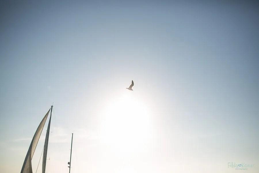 bird flying over atlantic ocean