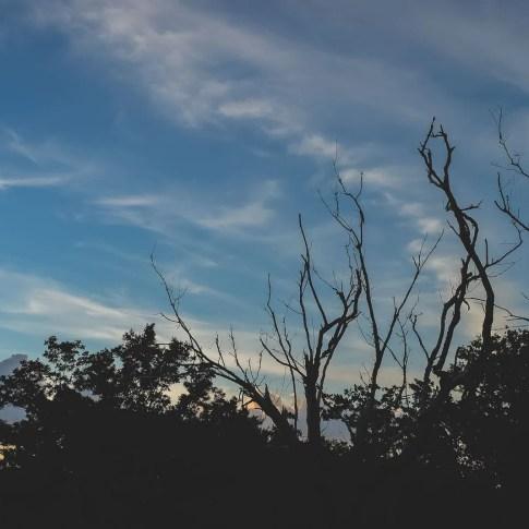 trees against sunset sky in florida keys