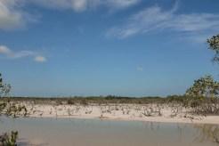 skyline of florida keys wetland