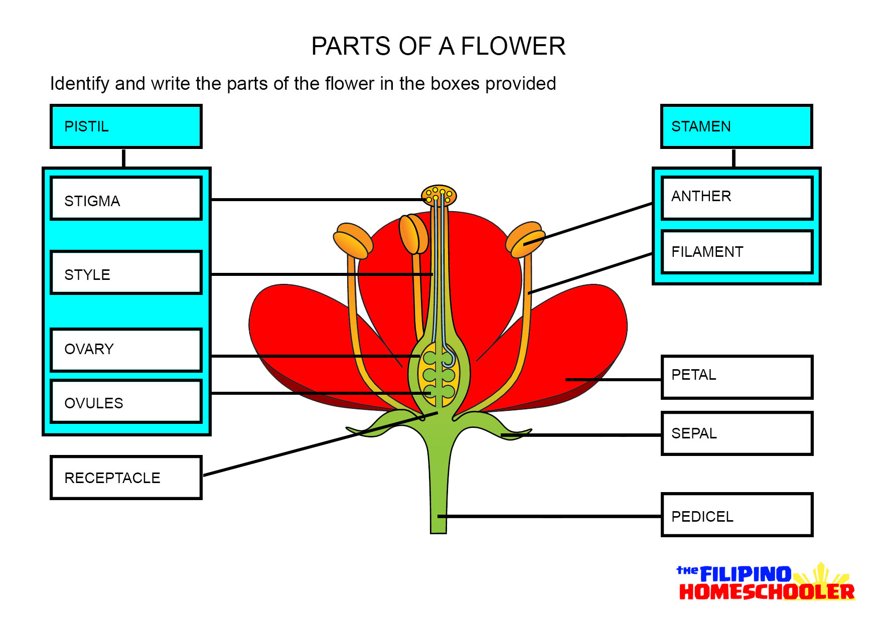 Plant Parts Worksheet Answers