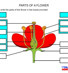 parts of a flower worksheet [ 1754 x 1240 Pixel ]