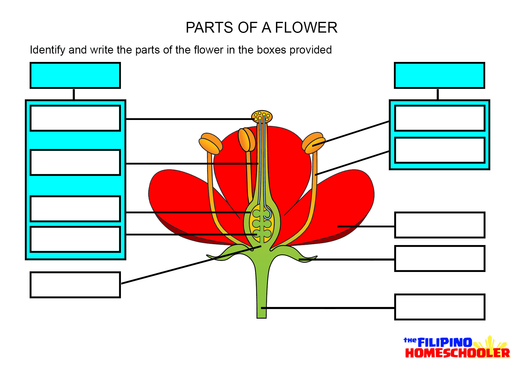 hight resolution of parts of a flower worksheet