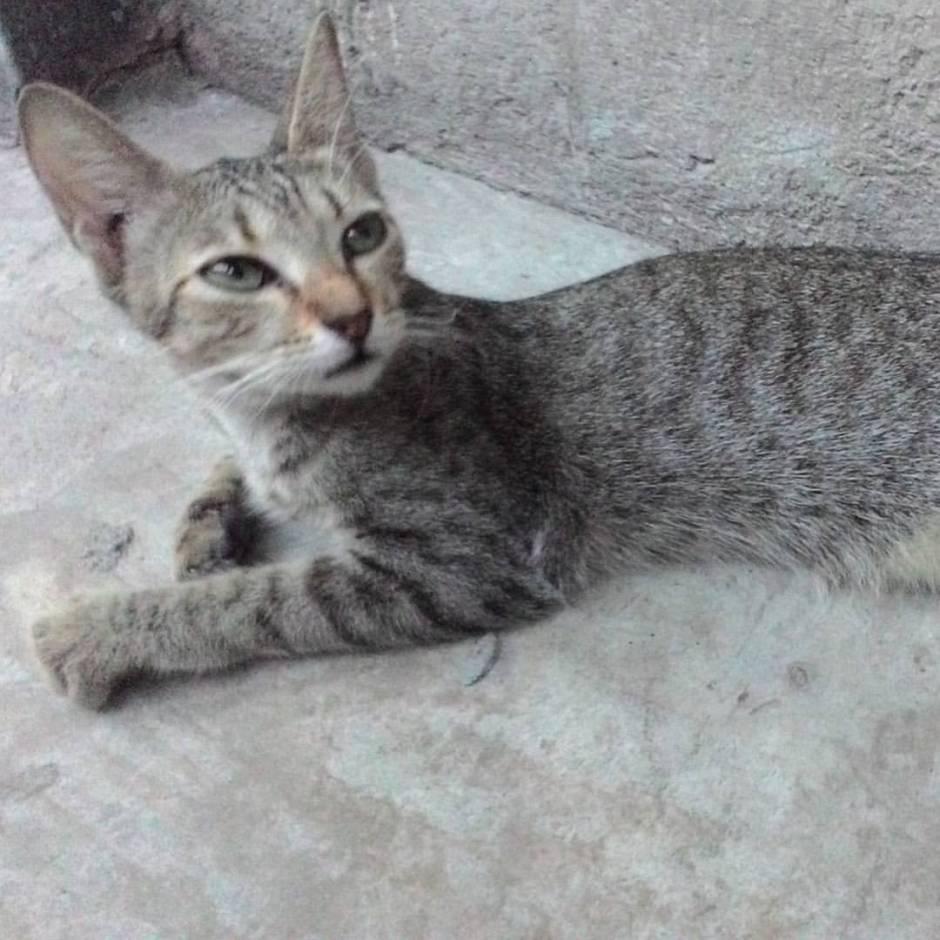 photos of pet cats