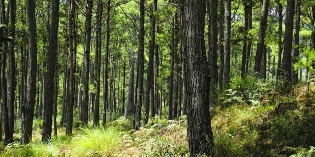 tree planting requirement for graduates philippines