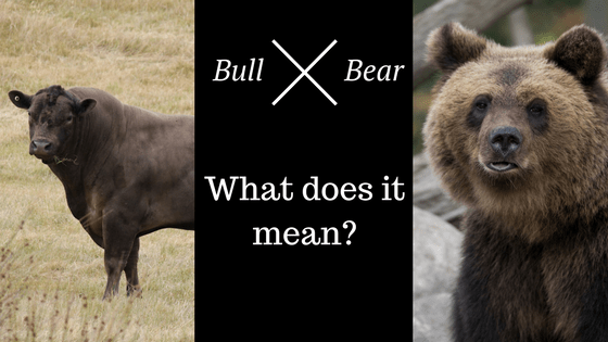 Bear or Bull? What do These Market Terms Mean?