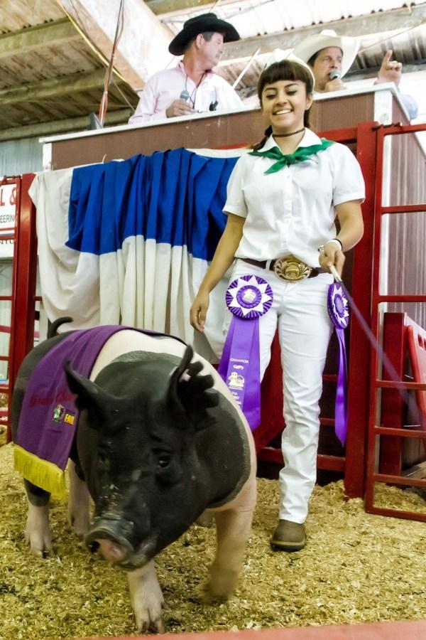 County Fair Jr. Livestock Auction Winners Fillmore