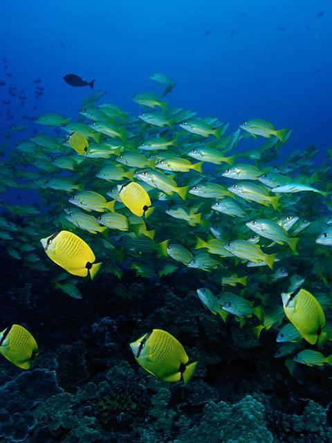 Animated Aquarium Wallpaper Tropical Fish School Wallpaper Wallpaper Wide Hd