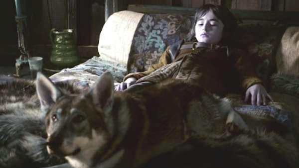 Bran Starks Direwolf In Game of Thrones Dies Of Cancer