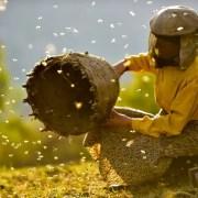 HONEYLAND: فیلمبرداری مستند بسیار مهم و جهانی