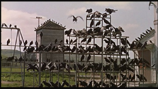 Birds-hitchcock-filmloverss