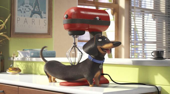 the-secret-life-of-pets-filmloverss