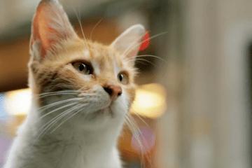kedi-filmi-filmloverss