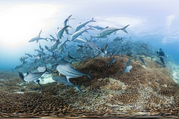 chasing-coral-netflix-filmloverss