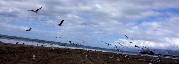 DSC00256_seagulls_600@72