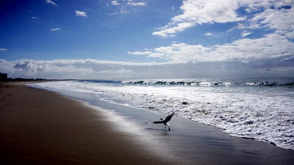 DSC00420_sea gull jogging_600@72