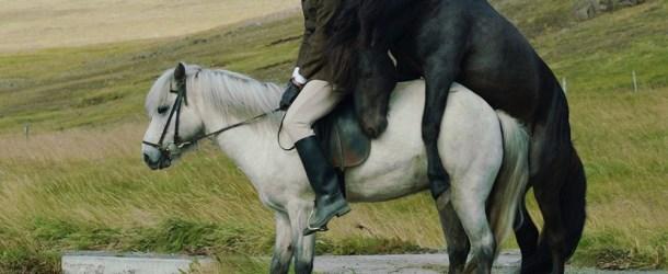 """Kritik zu """"Von Menschen und Pferden"""" – Willkommen auf Island"""