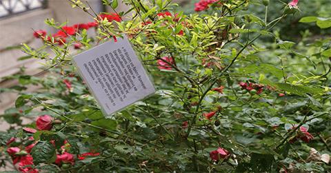«O Κήπος του Φιλολόγου»: Έκθεση / εγκατάσταση της εικαστικού Ελένης Παπαϊωάννου στον κήπο του Επιγραφικού Μουσείου